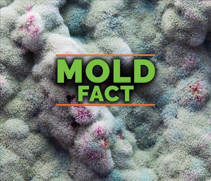 Mold Remediation Not All Molds Are Created Equal: Your Guide to Common House Molds