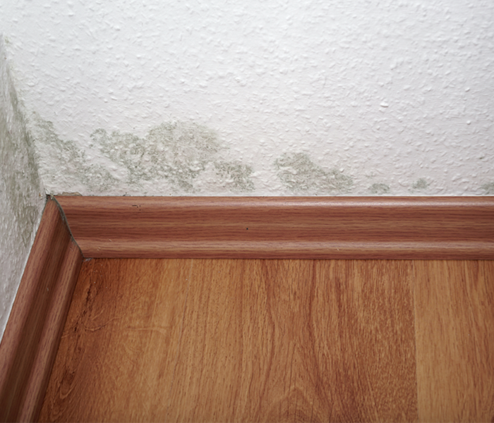 Mold Remediation SERVPRO Mold Damage Remediation