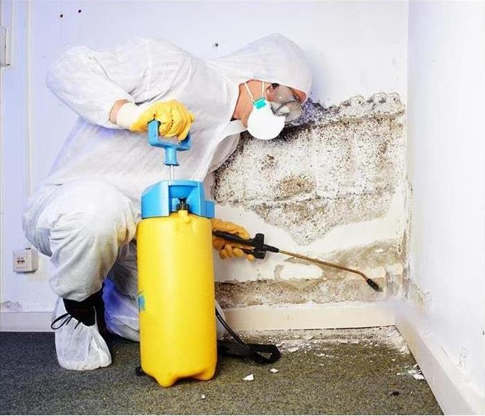 Mold Remediation St Louis mold damage - Toxic mold in the home